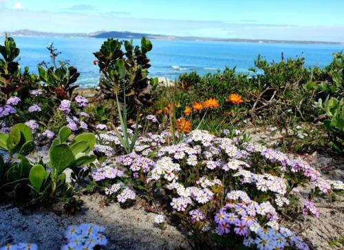 Wild flower viewing in the dunes of Langebaan close to Crystal Lagoon lodge