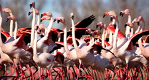 SA's Langebaan Lagoon with its flamingoes  a top destination